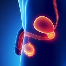 pre-operation-info-penile-implant-02